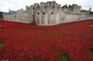 Poppies, Tower of London