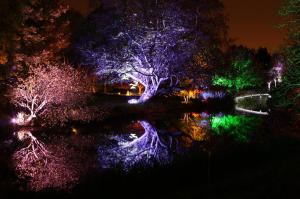 Enchanted Woodland, photo courtesy of Enchanted Woodland.